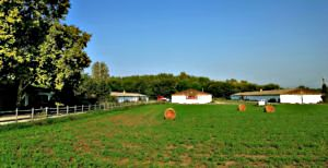 Agricultural property (#5038)